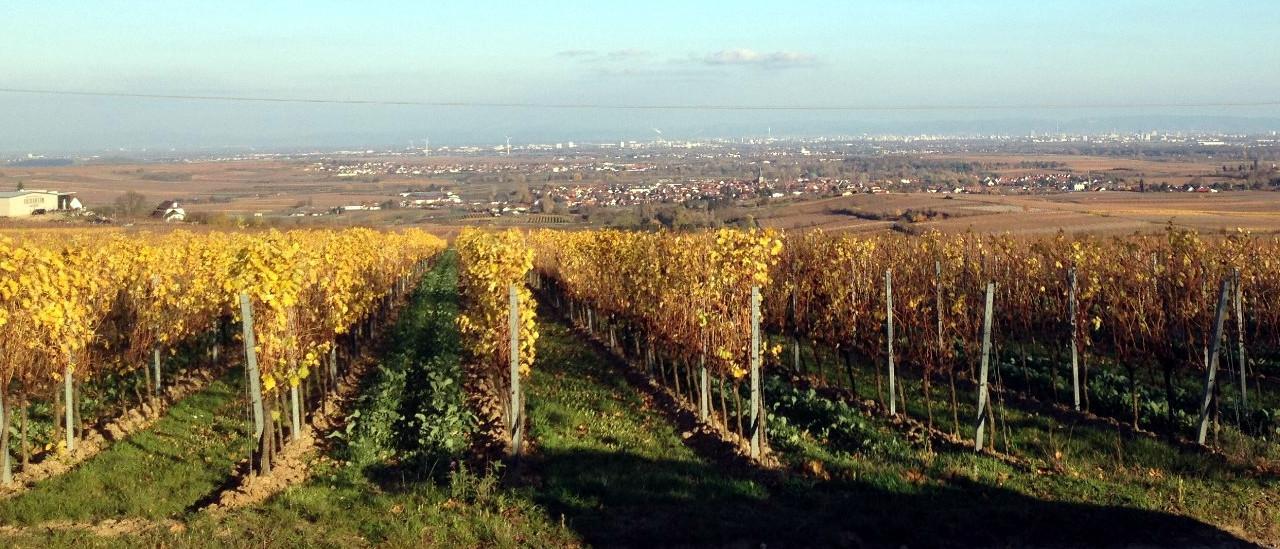 VTG Rheinland-Pfalz